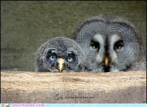 acting like animals,baby,background,chick,intimidating,lingering,looming,molting,mother,Owl,owls