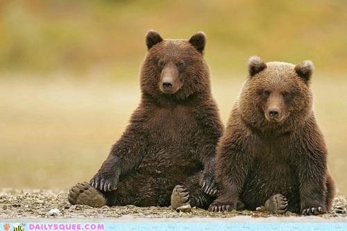 acting like animals,bear,bears,beginners-mind,bored,buddhism,grizzly bear,grizzly bears,impatient,meditating,sitting,zazen,zen
