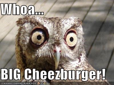 Cheezburger Image 4793052672
