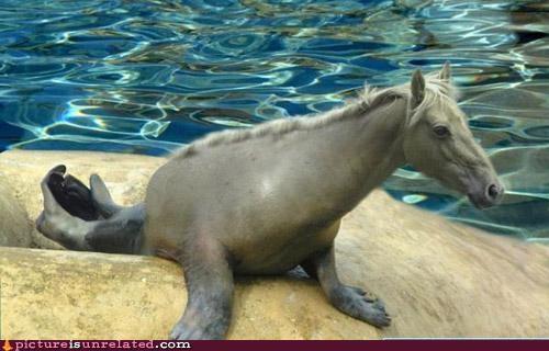 animals horse photoshop seahorse sealion wtf - 4793091072