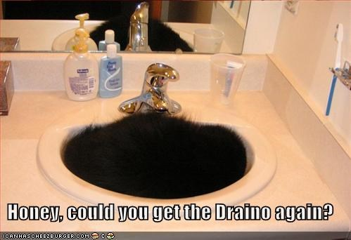 black,drano,lolcats,sink,sleeping