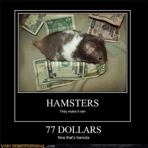 animals gansta hamsters hilarious money - 4793524736