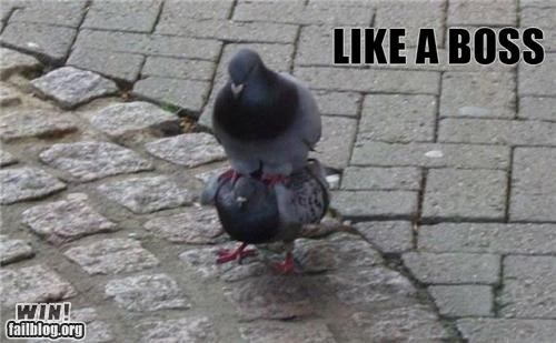 animals birds Like a Boss Memes