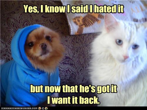 caption,captioned,cat,do want,dogs,Hypocrisy,hypocrite,jealous,pomeranian