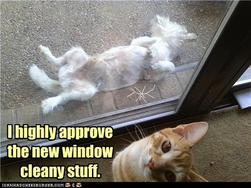 accident approve caption captioned cat cleaner cleaning dogs door glass highly knocked out new satisfied stuff window - 4793980928