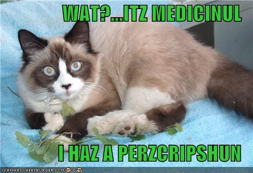 caption,captioned,cat,catnip,drug,excuse,i has,medicinal,prescription,what