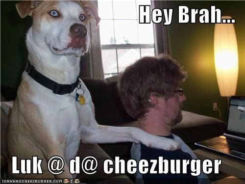 Cheezburger Image 4794045696