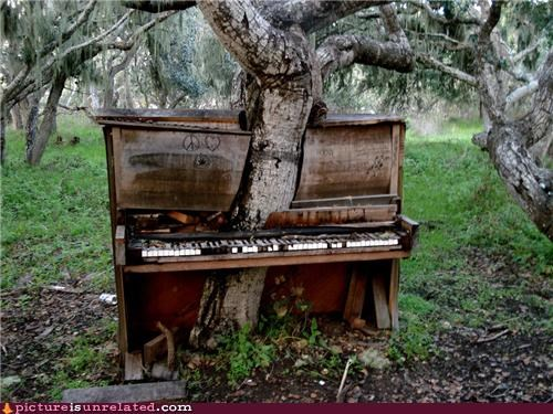 old,piano,sound,tree,wtf