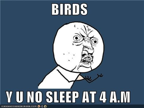 4am,birds,sleep,ugh,wake up,Y U No Guy