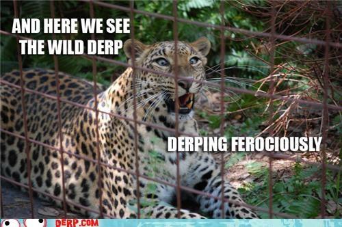big cat critters jaguar zoo - 4795027456