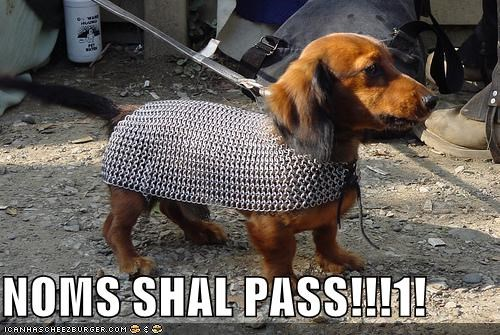 adorable armor chain mail costume dachshund dressed up gandalf Lord of the Rings none shall pass quote