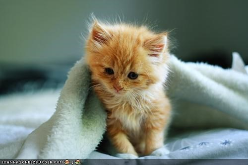 bed,blankets,cyoot kitteh of teh day,kitten,orange,tired,tuck in