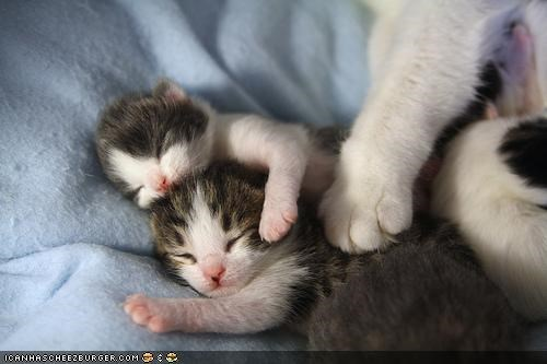cyoot kitteh of teh day,family,kitten,mama,mom,protector,sleeping,tiny