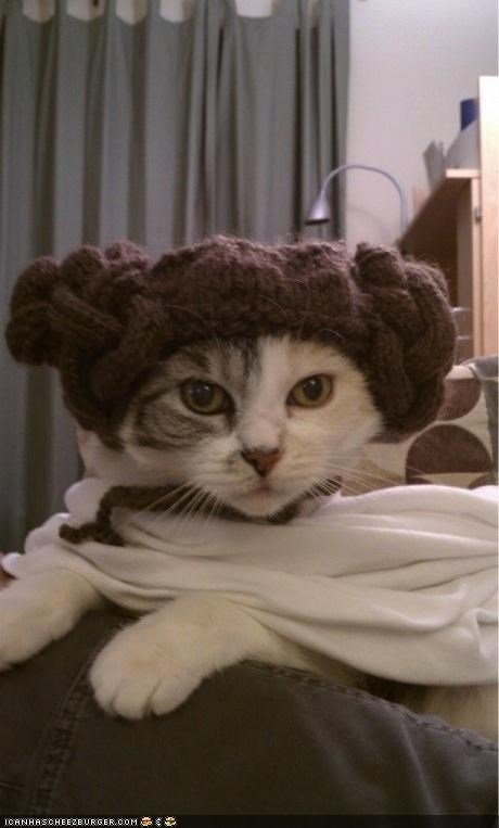 costume cyoot kitteh of teh day dressed up Princess Leia star wars - 4795467520