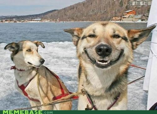 IRL Memes origins sled stoner dog - 4795597568