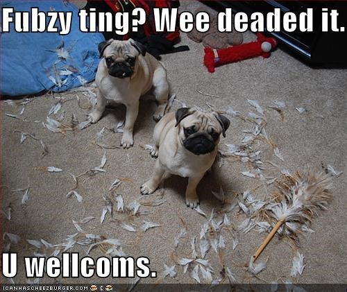 excuse,explanation,feather duster,fuzzy,killed,mess,pug,pugs,thing,youre-welcome