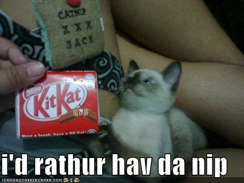 candy,caption,captioned,cat,catnip,have,kitkat,kitten,nip,noms,preference,rather,siamese