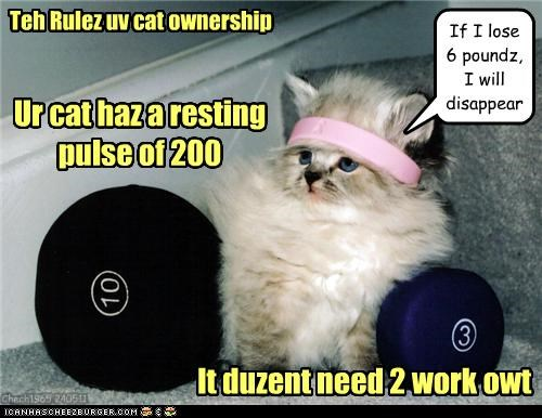 Teh Rulez uv cat ownership Ur cat haz a resting pulse of 200 It duzent need 2 work owt If I lose 6 poundz, I will disappear Chech1965 240511