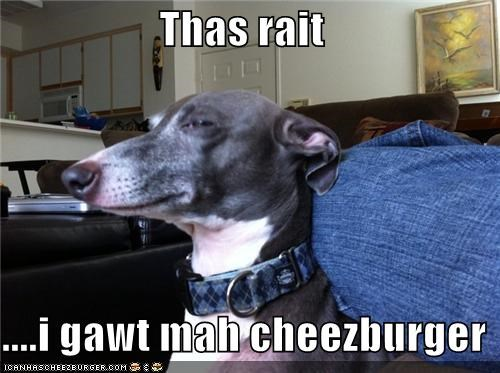 Cheezburger Image 4796275712