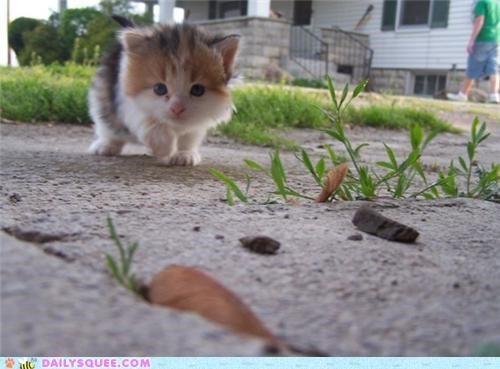 adage adorable baby cat confused early kitten morning prowl prowling stalking tiny virtue