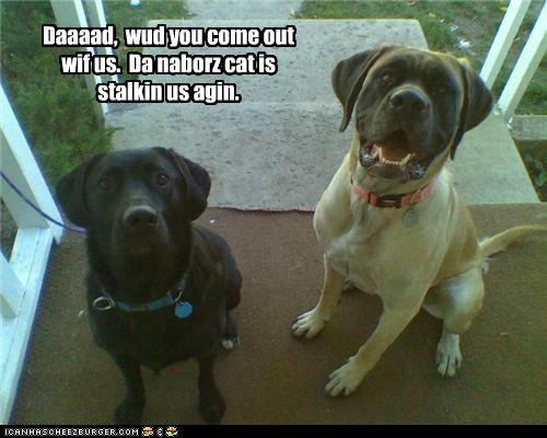 afraid,cat,dad,do not want,labrador,mastiff,neighbor,please,request,scared,stalking