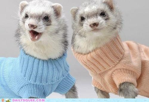 acting like animals,explanation,fashion,fashionista,fashionistas,ferret,ferrets,summer,summertime,turtleneck