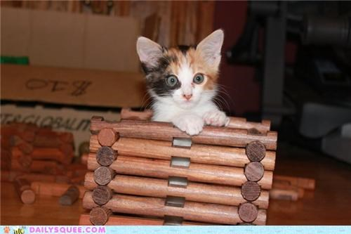 cat,disney,kitten,lincoln logs,Movie,ninja,rapunzel,reader squees,tangled,tower