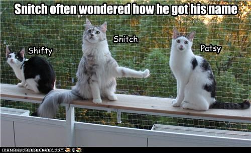 caption captioned cat Cats name snitch snitching wondered - 4797326592