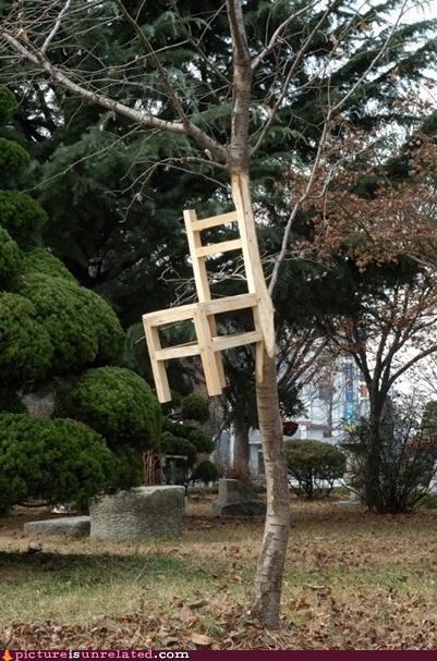 carved,chair,Growing,tree,wtf