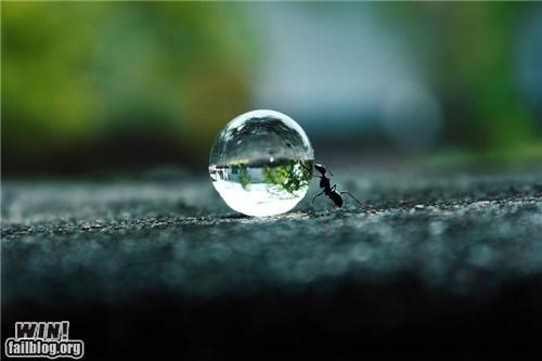 ants,awesome,insects,mother nature ftw,water,water orb