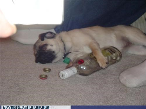 dogs,liquor,passed out