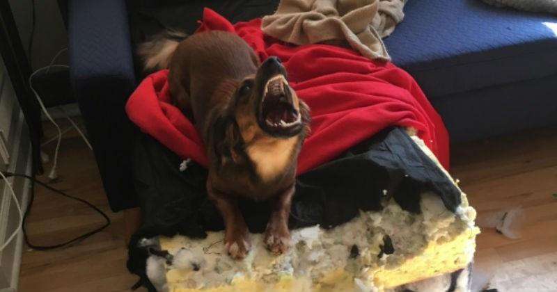 photoshop battle dog