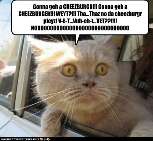 Gonna geh a CHEEZBURGR!!! Gonna geh a CHEEZBURGER!!! WEYT?!!! Tha...Thaz no da cheezburgr pleyz! V-E-T...Vuh-eh-t...VET??!!!! NOOOOOOOOOOOOOOOOOOOOOOOOOOOOOO