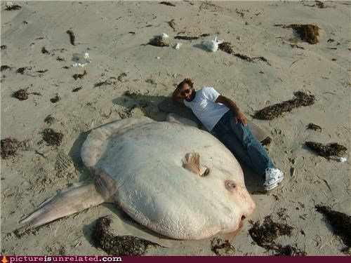 creepy fish huge wtf - 4798266368