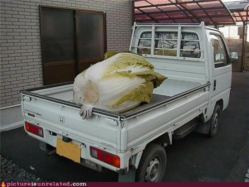 huge lettuce salad wtf - 4798271232