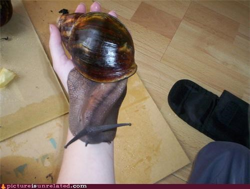 animal-non-human creepy huge snail wtf