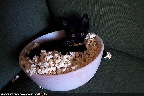 basement cat,bowl,cyoot kitteh of teh day,food,Movie,Popcorn