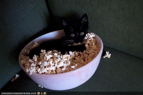 basement cat bowl cyoot kitteh of teh day food Movie Popcorn - 4798456064