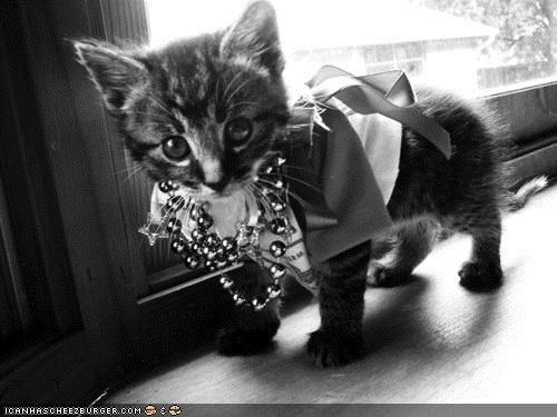 black and white cyoot kitteh of teh day dressed up fancy fashion - 4798458112