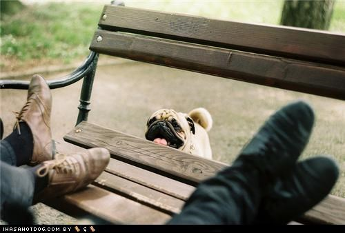 bench feet park pug relax walk