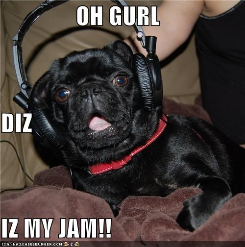best of the week headphones jam jammin Music pug rocking out this is my jam