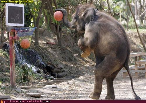 basketball,elephant,sports,wtf