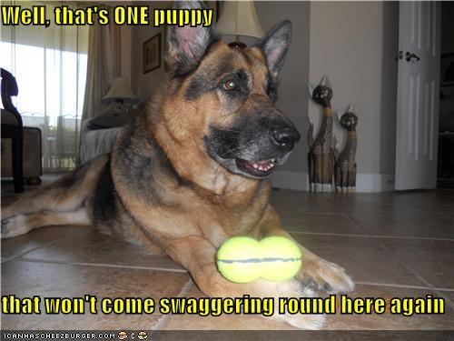 german shepherd positive punished punishment puppy - 4799535104