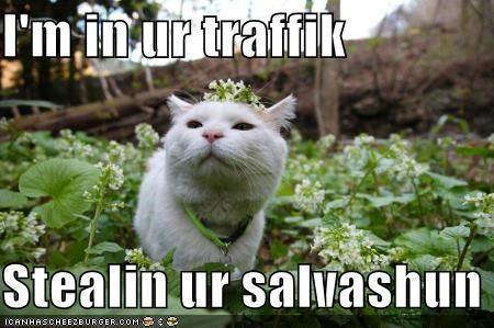 I'm in ur traffik  Stealin ur salvashun