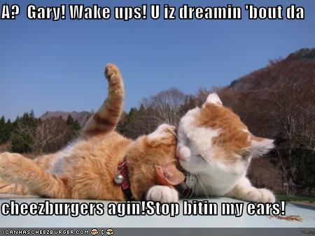 A?  Gary! Wake ups! U iz dreamin 'bout da   cheezburgers agin!Stop bitin my ears!
