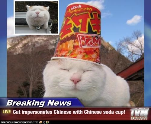 Breaking News - Cat impersonates Chinese with Chinese soda cup!