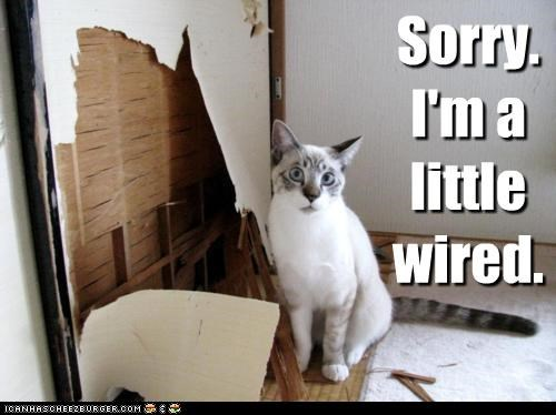 accident apology caption captioned cat damage energy hyper little sorry Wired - 4799683072