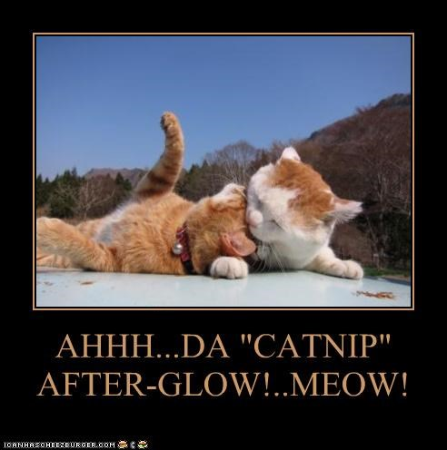 "AHHH...DA ""CATNIP"" AFTER-GLOW!..MEOW!"