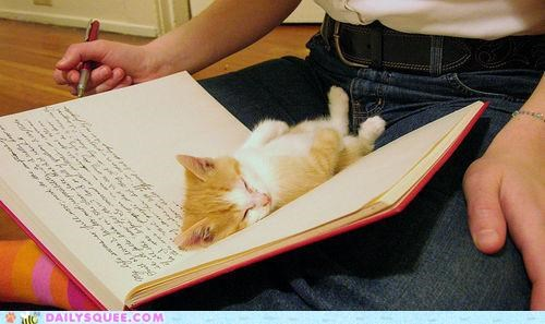 asleep baby book cat diary exhausted kitten laying down sleep sleeping tabby tired - 4799871232