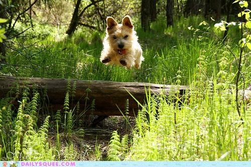 baby cartoons flying jumping puppy running scottish terrier superhero terrier Theme Song underdog - 4799900160